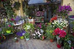 Blomsterhandel i gatan, provence, Frankrike Royaltyfria Bilder