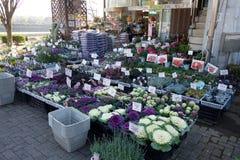 Blomsterhandel på vägsidan av Kyoto, Japan Arkivbilder