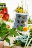 Blomsterhandelapplikation royaltyfri fotografi
