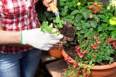 blomsterhandlare royaltyfria bilder