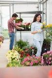 Blomsterhandlare kopplar ihop arbete med blommor på ett växthus Royaltyfri Fotografi