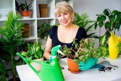 Blomsterhandlare på arbete i växthus Fotografering för Bildbyråer
