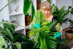 Blomsterhandlare på arbete i växthus Royaltyfri Foto
