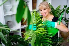 Blomsterhandlare på arbete i växthus Royaltyfri Bild