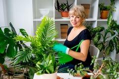 Blomsterhandlare på arbete i växthus Arkivfoto