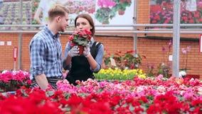 Blomsterhandlare som arbetar med blommor i växthus stock video