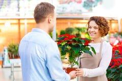 Blomsterhandlare som ger den blommande blomman till hennes klient Royaltyfria Foton