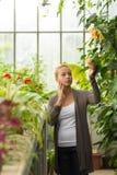 Blomsterhandlarekvinna som arbetar i växthus Royaltyfri Bild