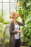 Blomsterhandlarekvinna som arbetar i växthus Arkivbild
