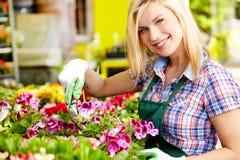 Blomsterhandlarekvinna som arbetar med blommor Arkivfoto
