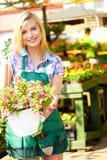 Blomsterhandlarekvinna som arbetar med blommor Arkivbilder