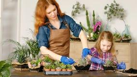Blomsterhandlaren för hobbyen för Diy florariumfamiljeföretag shoppar lager videofilmer