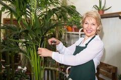 Blomsterhandlaren med nagelsax i blom- shoppar Arkivbilder