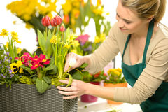 Blomsterhandlaren ordnar färgrika vårblommor Royaltyfri Foto