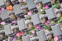 blomsterrabatt Arkivbilder