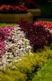 blomsterrabatt Arkivfoton