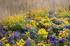 blomsterrabatt Fotografering för Bildbyråer
