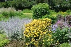 Blomsterrabatt av öra för ` s för Stachysbyzantinalamm, blått cranesbillsG royaltyfri fotografi