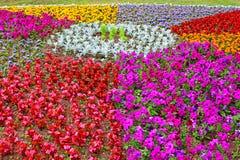 Blomsterrabatt av färgrika blommor Arkivbilder