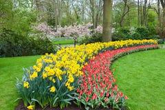 Blomsterrabatt i den Keukenhof trädgården, Nederländerna arkivfoto