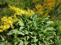 Blomsterrabatt i gården Arkivfoto
