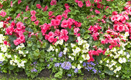 Blomsterrabatt med blommor Fotografering för Bildbyråer