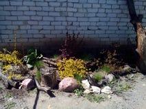 Blomsterrabatt med buskar och växter Royaltyfri Bild