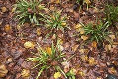 Blomsterrabatt med Carexväxter fotografering för bildbyråer