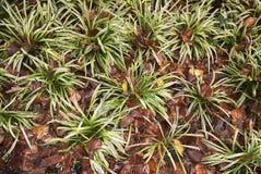 Blomsterrabatt med Carexväxter royaltyfria foton