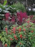 Blomsterrabatt med högväxta tunna stammar med röda blommor och blommor med sned bollgräsplansidor royaltyfri bild