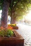 Blomsterrabatt med tulpan i den Istanbul gatan i ottan under festivalen av tulpan arkivfoto