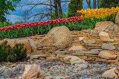 Blomsterrabatt med tulpan i trädgården Arkivfoto