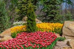 Blomsterrabatt med tulpan i trädgården Royaltyfri Fotografi