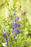 Blomsterrabatt med visa blommor royaltyfri foto