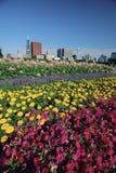 Blomsterrabattar i anslags- Park Royaltyfria Bilder