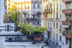 Blomsterrabatter på balkongen på solnedgången av dagen Royaltyfri Fotografi