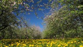 Blomstra äpplefruktträdgården som skjuter glidaren stock video