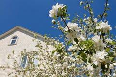 Blomstra äpplet, himmelhus Royaltyfri Bild
