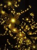 Blomstra av ljus arkivfoton