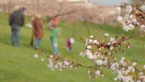 blomstra bild rasterized sakura tree Oskarp bakgrund för selektiv fokus arkivfilmer