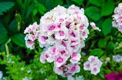blomstra blommor Arkivbild