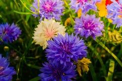 blomstra blommor Arkivfoto