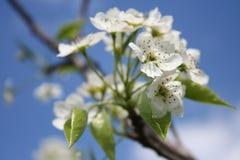 blomstra blomningtreen Arkivfoto
