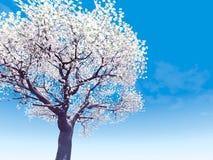 Blomstra cherry-tree arkivbild