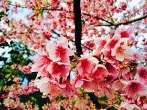 Blomstra den rosa blomman Arkivfoton