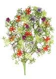 blomstra ensam sommartree Arkivfoton