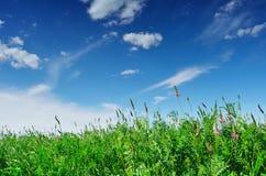 Blomstra fältet i en solig dag Royaltyfri Foto