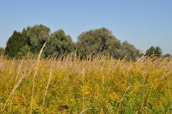Blomstra fältet i sen sommar fotografering för bildbyråer