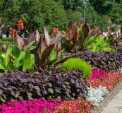 Blomstra färgrika blomsterrabatter i sommarstad parkera i Riga royaltyfri fotografi