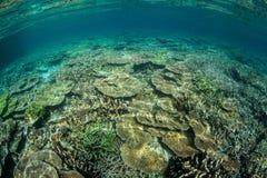 blomstra för korallrev arkivbild